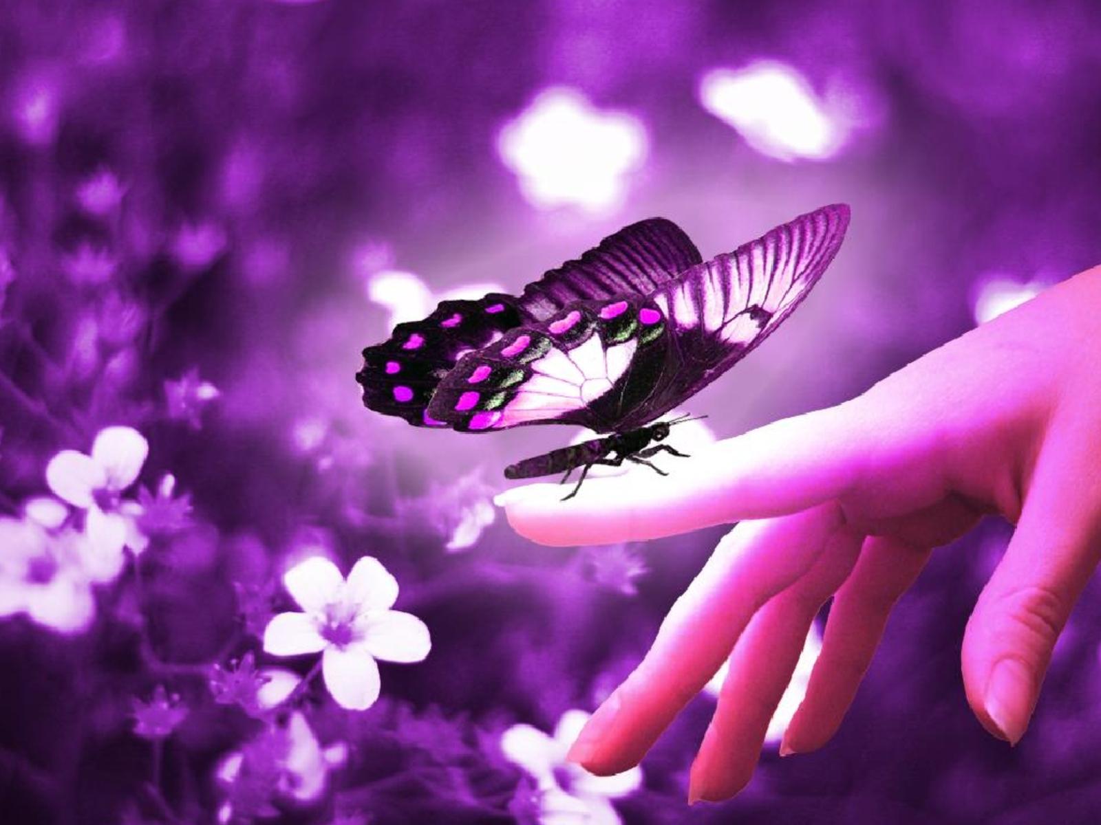 Älska sinnligt och fjärilslätt